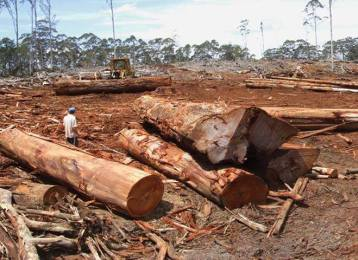 logging image for online petition